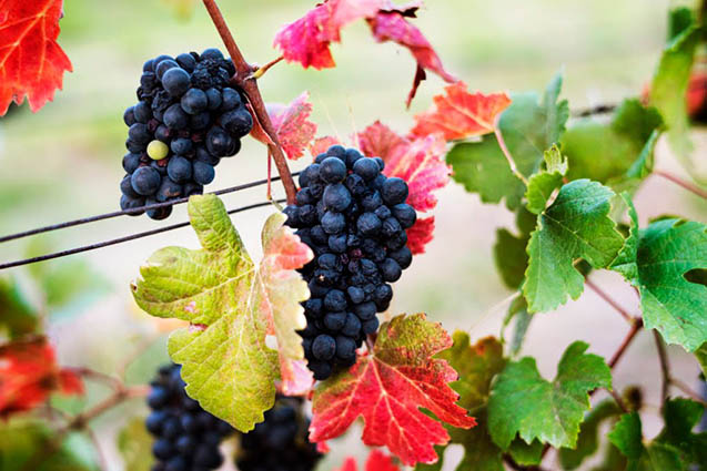 Platform uses the blockchain to track wine chain production